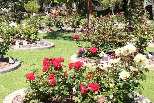 Memorial Garden Family Rose