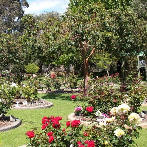 Memorial Rose Gardens